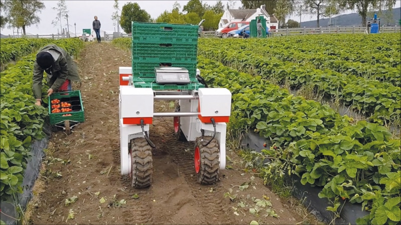 Easy pickings? How robot farm hands could revolutionise