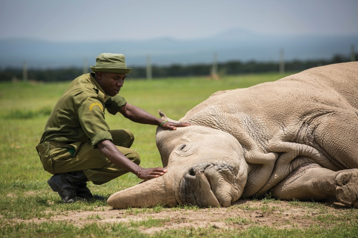 Moment that mattered: The last male northern white rhino